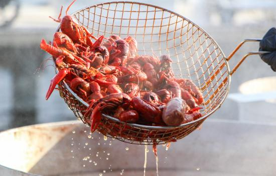 Fun Facts About Crawfish You Might Not Know